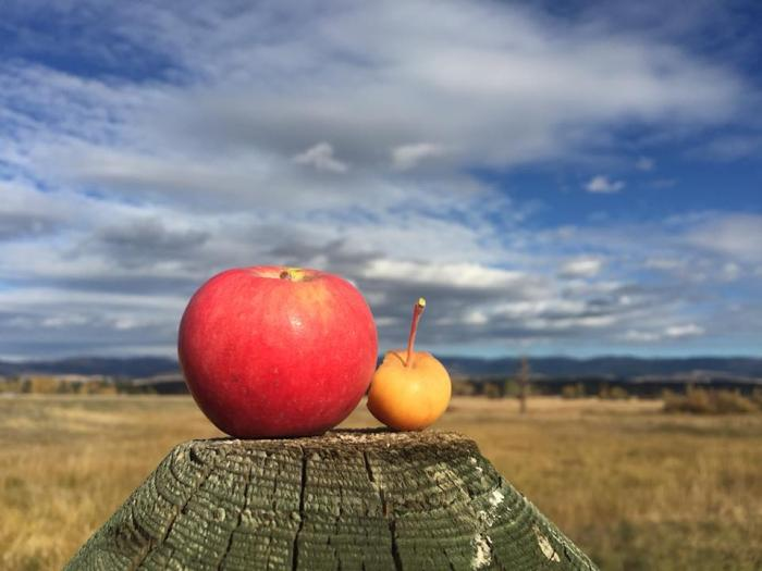 Florence couple brings apple spirits to Montana, Pulsara announces latest version of its communication platform, Great Falls named most affordable food processing market, state's first freestanding rehab hospital to open in Billings and more