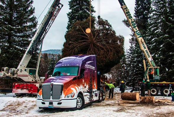MT business roundup: U.S. Capitol tree from Montana, Montana unemployment rate 3.9%, Missoula biotech firm DermaXon set for growth and more